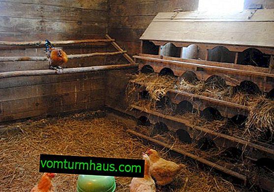 Kull för kycklingsko med bakterier: fördelar och nackdelar, användarregler