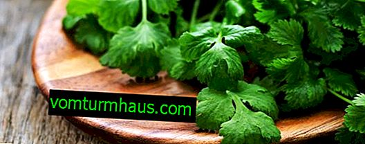 Features of the use of cilantro for men's health