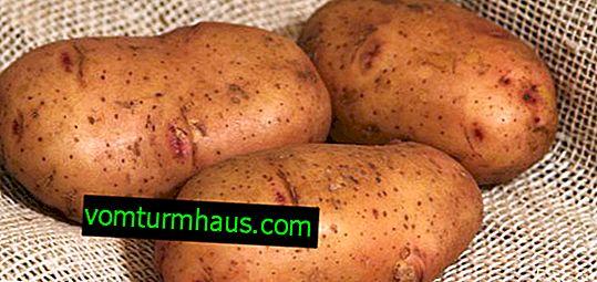 Картофи Тирас: характеристики и характеристики на отглеждането на сортове