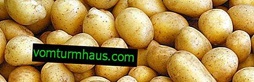 Kartoffelsorte Felox: Botanische Beschreibung, Anbau und Pflege landwirtschaftlicher Technik