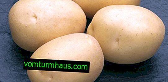 Sylvanas di patate: descrizione e caratteristiche, tecnologia agricola, semina e cura