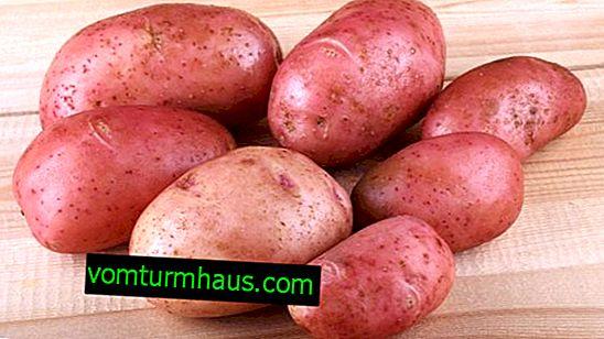 Variété de pomme de terre rose de Crimée: description botanique, techniques agricoles de culture et de soin