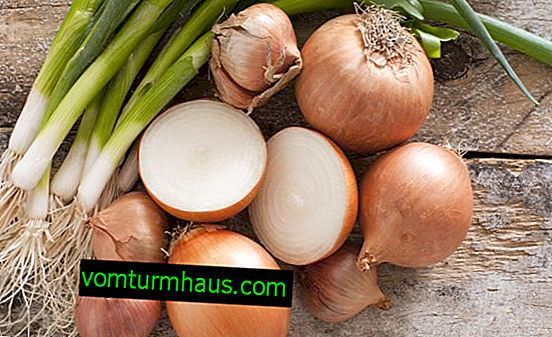 The benefits and harms of onions for women's health