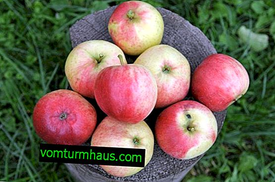 Charakterystyka i techniki rolnicze uprawy jabłoni odmiany Afrodyty