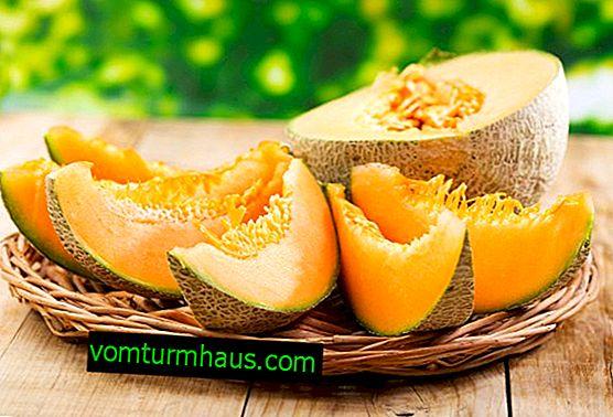 Vlastnosti jíst meloun s dnou