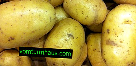 Description and characteristics of the Dutch potato variety