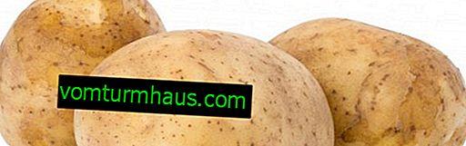 Caractéristiques de la plantation et de l'entretien des pommes de terre de la variété Melody