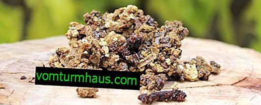 Simptomi alergije i liječenja propolisa