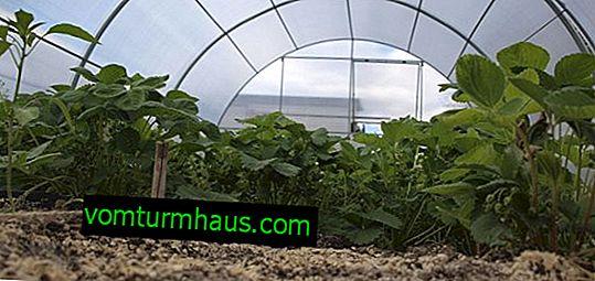 Er det nødvendigt, og hvordan ændres jorden i et drivhus?