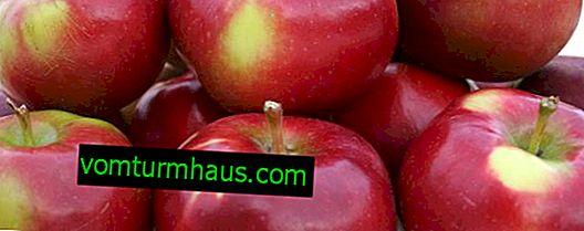 Opis i cechy odmiany jabłek Enterprise