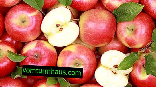 Struktura i opis jabłoni