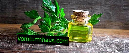 Funktioner af persilleolie og dens anvendelse