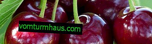 Funktioner av plantering och vård av söta körsbär Sabrina