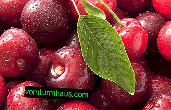 Fördelarna med att äta körsbär för människokroppen