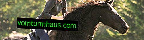 Como aprender a galopar a cavalo: tipos de equitação, regras básicas