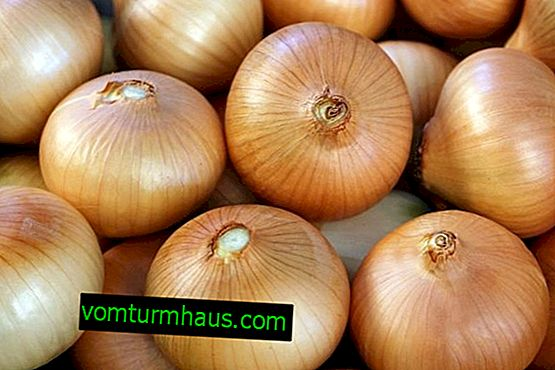 Cibule Golden Semko: popis a vlastnosti pěstování