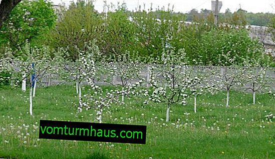 ¿A qué distancia deben plantarse los manzanos?