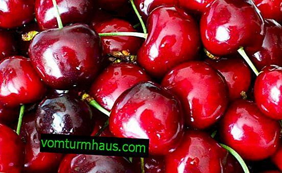 Hur man planterar söta körsbärsplantor på hösten