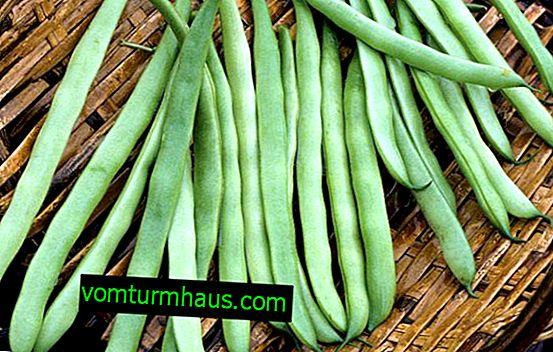 Características do uso de feijão de aspargos