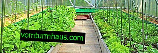 Hur man tar väg i växthus själv?
