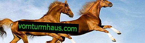 Vilken är den genomsnittliga hastigheten en häst kör