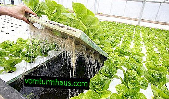 Funktioner i hydroponiska system i växthus