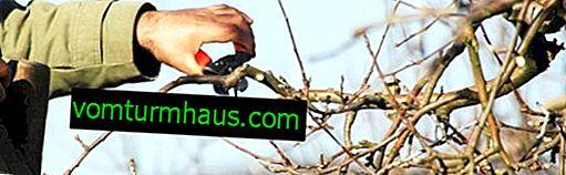 Funkce prořezávání starých jabloní