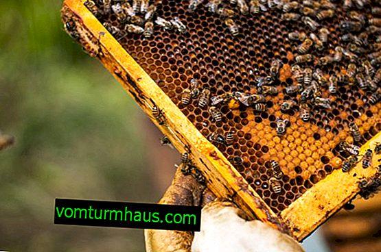 Orsaker och metoder för att använda myrsyra i biodling
