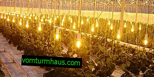 Choose sodium lamps for the greenhouse