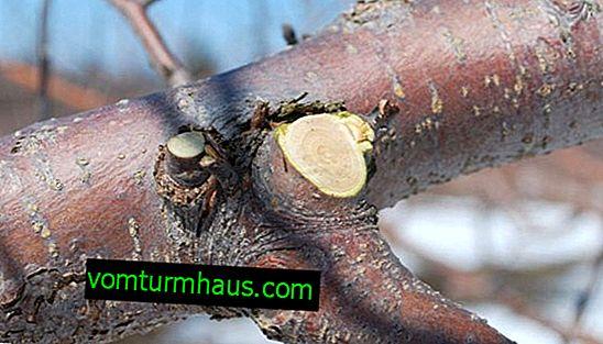 Co a jak pokrýt plátky jabloní?