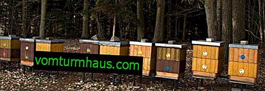 Colocación de un apiario en un área forestal