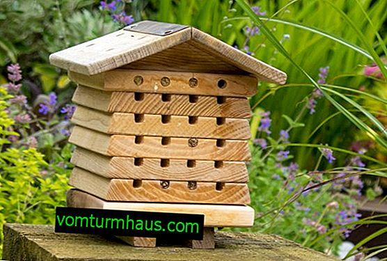 Ako si vyrobiť včelí dom?
