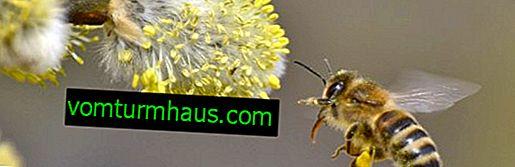 Пролетни съвети за грижа за пчелите