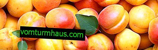 Merkmale der Verwendung von Aprikosen während des Stillens