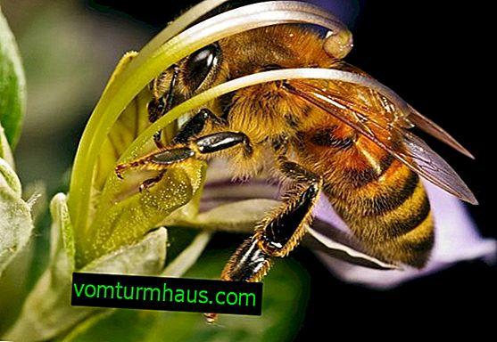 Namen delovnih čebel