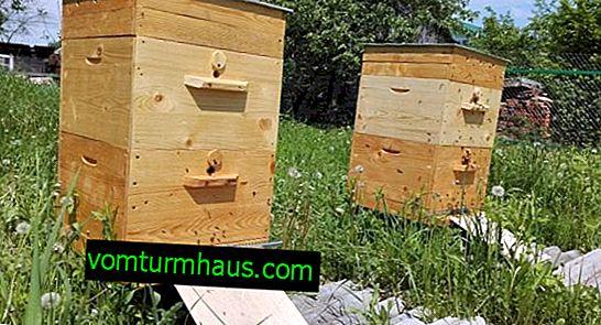 Les principales caractéristiques des grandes ruches russes
