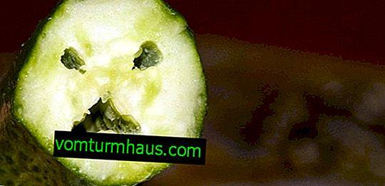 Prečo sú uhorky vo vnútri prázdne a ako sa tohto problému zbaviť