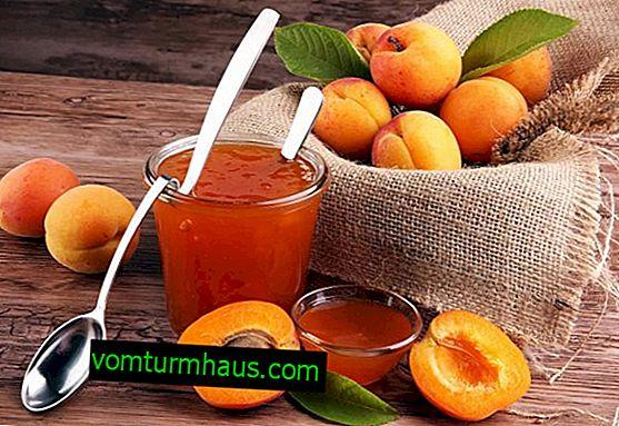 Användbara och skadliga egenskaper hos aprikosdrift för människors hälsa