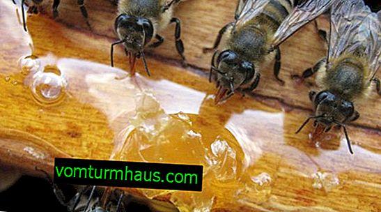 วิธีการเลี้ยงผึ้งอย่างถูกวิธี