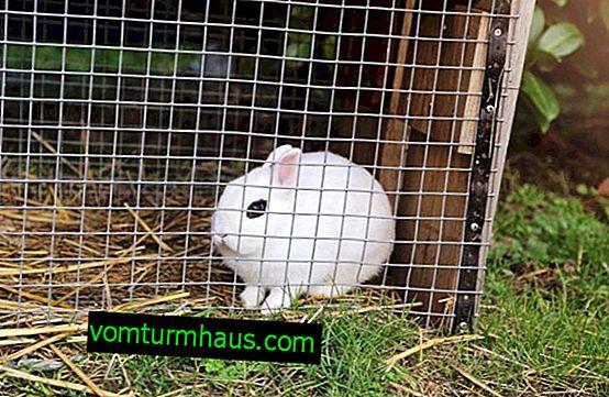 Hvilket mesh er nødvendigt for kaninceller: størrelse, konstruktion af en celle fra et mesh