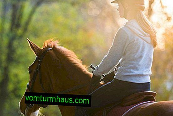 Hur man lär sig att rida på en häst korrekt