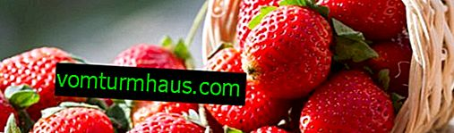Come coltivare fragole dai semi?