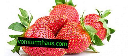 Sadzenie i pielęgnacja odmiany truskawek Alba