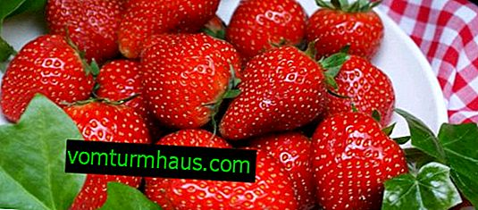 Caratteristiche della cura e della coltivazione delle fragole di Ginevra