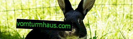 Vilken typ av gräs kan ges till kaniner, och vilken typ kan inte ges?