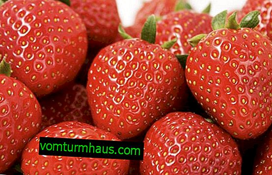 Vlastnosti Rumba Strawberry