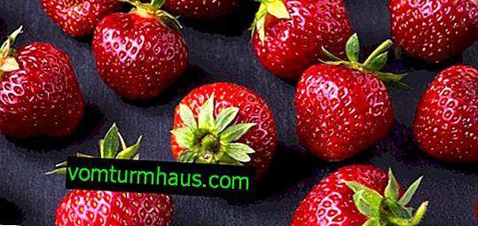 Büyüyen çileklerin özellikleri Günaha ve bakım