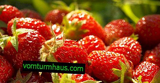 Ягоди в пирамидите: плюсовете и минусите на отглеждането