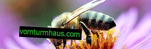 Produkter produceret af bier