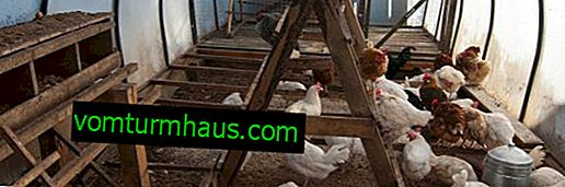 Как да организираме зимуването на птици в оранжерия?